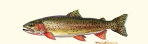 020305L_Cutthroat Trou tProfile